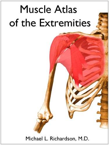 Large book cover: Muscle Atlas of the Extremities