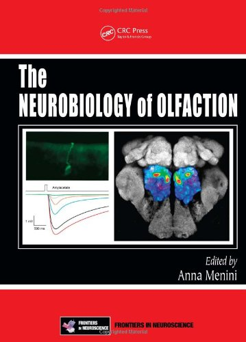 Large book cover: The Neurobiology of Olfaction