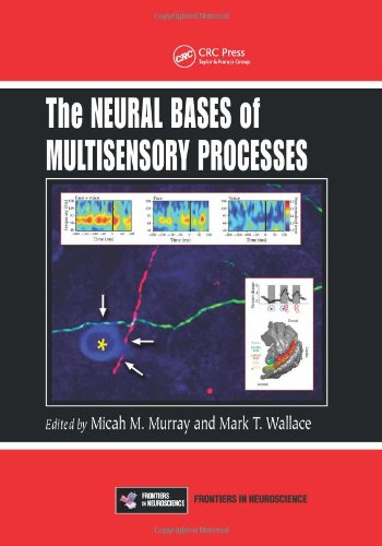 Large book cover: The Neural Bases of Multisensory Processes